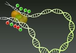 DNA methylation dynamics at distal regulatory regions