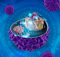 Information processing in mammalian signaling pathways
