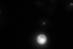 YEL061C