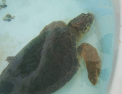 Sea Turtles Rescue Center - September 2018