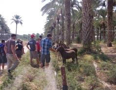 BioBee and Kibbutzim River picture no. 3