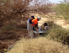 Arava Acacia field campaign
