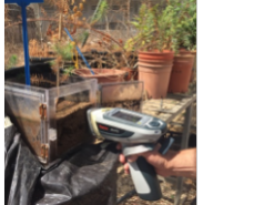 Soil Element root - microbial interaction experiment