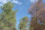 Tree mortality